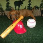 BaseballDoxie