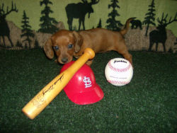 BaseballDoxie